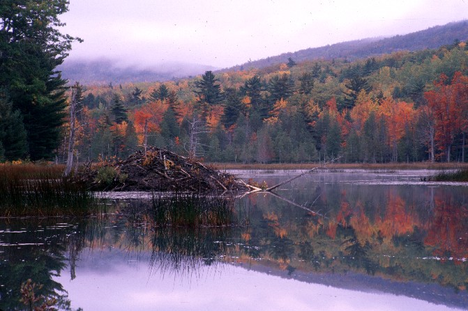 Beaver Lodge, Breakneck Pond
