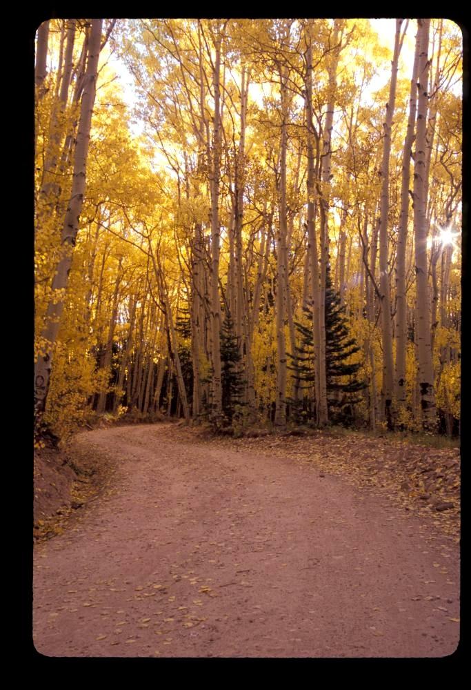Autumn morning on Last Dollar Road near Telluride, CO