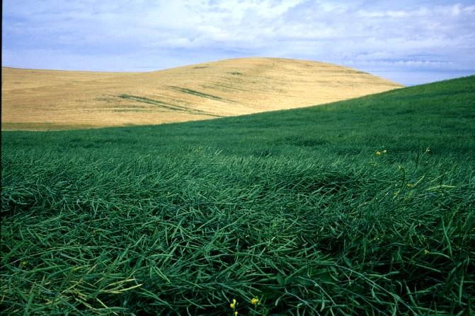 Palouse farm land near Colfax, WA