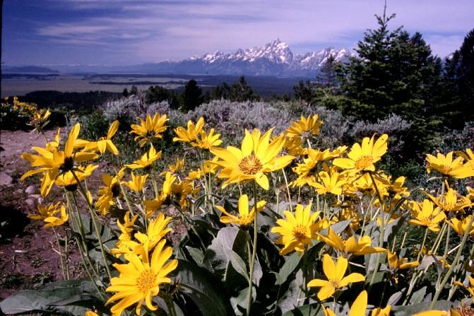 Mule Ears on Signal Mountain, Grand Teton Nat'l Park